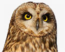 Wise Old Owl's Avatar